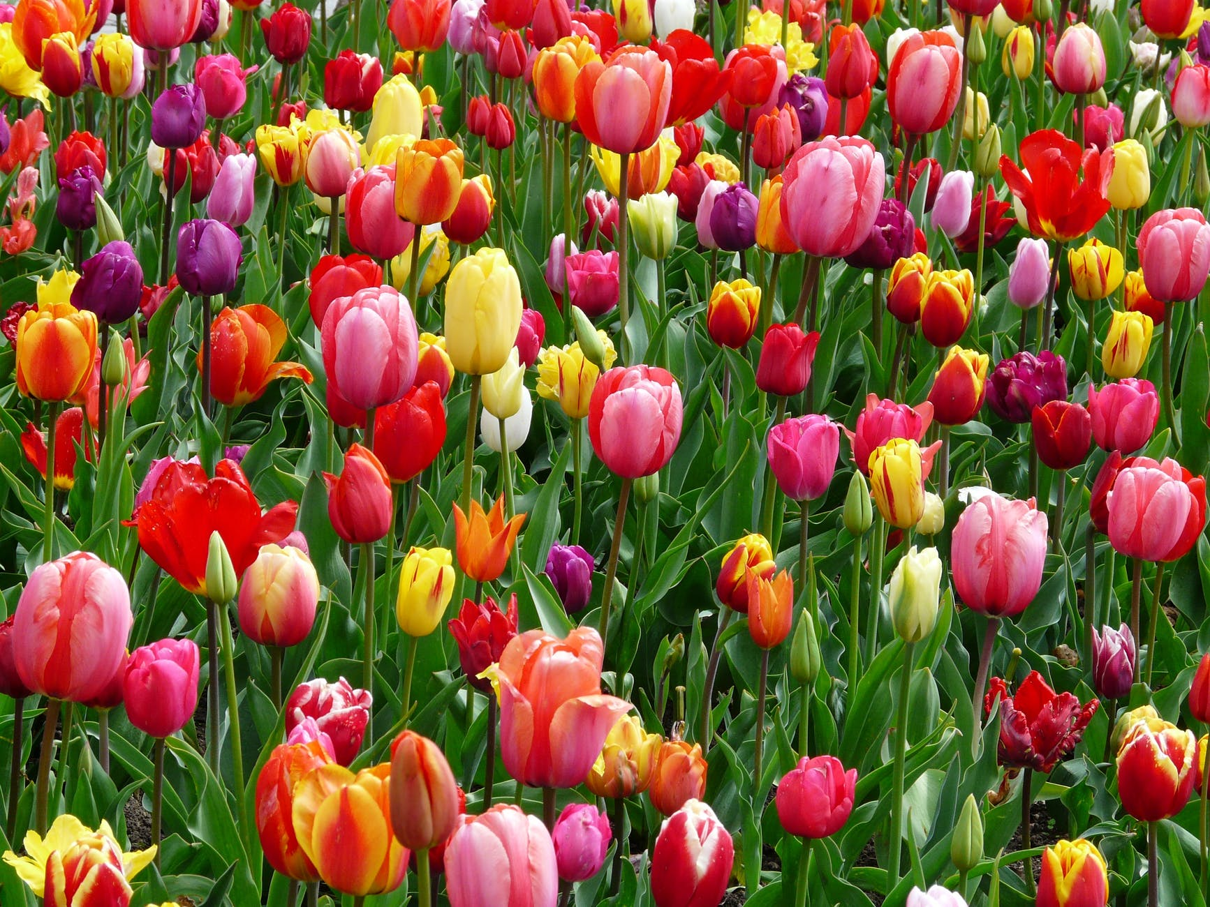 Tavaszi nagytakarítás